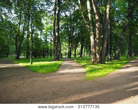 Three Way Foot Path In The Park. Landscape Of Sunny Summer Forest With Crossroad. Making Decisions A