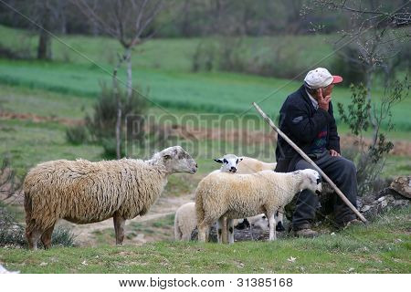 Shepherd with sheep on green landscape