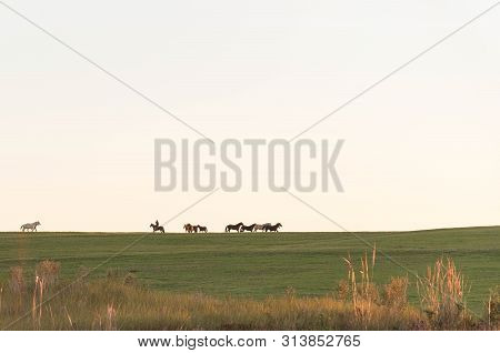 Horses On The Prairie In The Late Afternoon. Rural Scene On A Farm In Brazil. Horse Breeding Ranch I