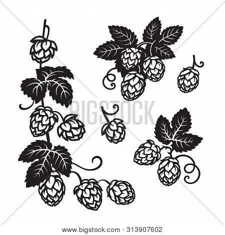 Branches Of Hops. Set Of Elements For Brewery Design. Hop Cones With Leaves Icons. Hand Drawn Vector