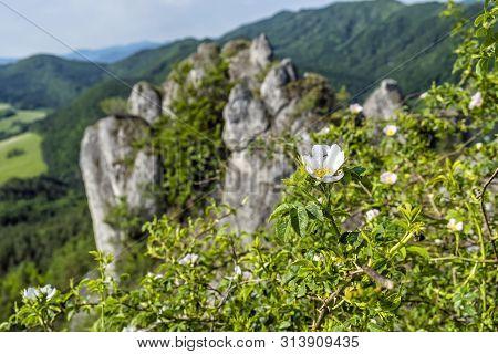 Rosehip Bush, Sulov Rocks, Slovak Republic. Seasonal Natural Scene. Hiking Theme.