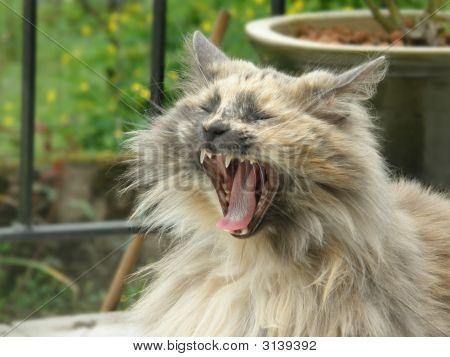 Pepper Yawn
