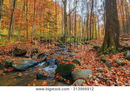 Brook Among The Rock In Autumn Forest. Fallen Foliage On The Ground. Beautiful Nature Scenery