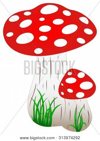 Red Amanita Fly Agaric Mushroom With Green Grass As Vector. Mushroom On A Isolated White Background.