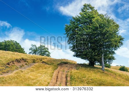 Lush Tree Near The Dirt Road Uphill. Beautiful Summer Scenery In August. Meadow On The Hill In Weath