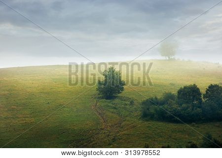 Trees On The Hill In Fog. Gloomy Weather With Overcast Sky. Green Grass On The Meadow. Countryside A