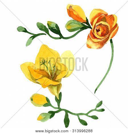 Yellow Freesia Floral Botanical Flowers. Watercolor B Ackground Illustration Set. Isolated Freesia I