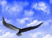 An eagle flight against a sky with white clouds poster