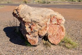 Petrified Wood In Jasper Forest. Petrified Forest National Park On Route 66 In Arizona