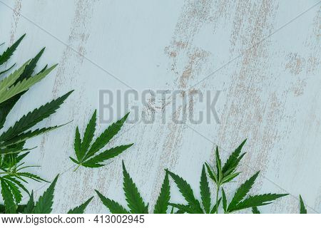 Top View Of Green Cannabis Leaves Border On Light Blue Wooden Background With Copy Space For Text