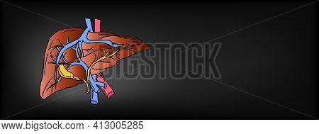 Healthy Liver Poster. Organic Healthy Liver Realistic Organ Concept. Vector Illustration.