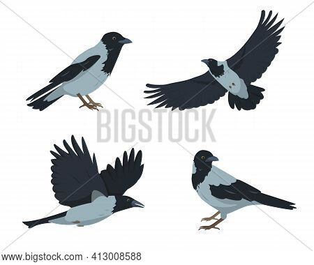 Crow Birds Set In Different Poses Isolated