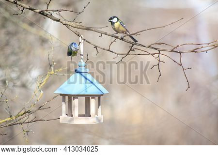 Great Tit And Blue Tits Sit Next To Wooden Bird Feeder. Feeding Birds In Winter Concept