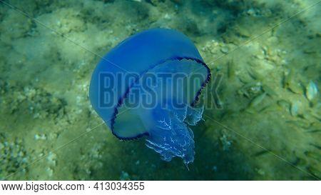 Barrel Jellyfish (rhizostoma Pulmo), Dustbin-lid Jellyfish Or Frilly-mouthed Jellyfish Undersea, Aeg