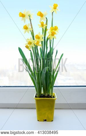 A Yellow Potted First Spring Flowers Narcissus On A Window Sill, Live Bouquet Of Beautiful Colorful