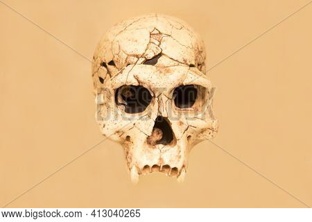 The Skull Of The Dmanis Working Man (latin: Homo Ergaster Georgicus) Is Isolated On A White Backgrou