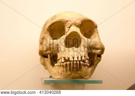 The Early Type Neanderthal Skull (latin: Homo Neanderthalensis) Is Isolated On A White Background. P