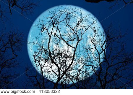 Super Sturgeon Blue Moon And Silhouette Tree In The Night Sky