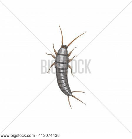Silverfish Or Firebrat Icon, Insect Pest Control Disinsection And Extermination, Vector. Silverfish