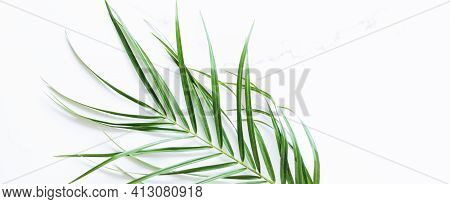 Green Exotic Leaf On White Marble Background, Luxury Branding Flat Lay And Brand Identity Design For