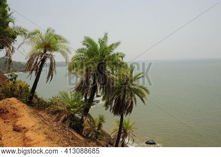 Palm Trees And The Beach In Kerala