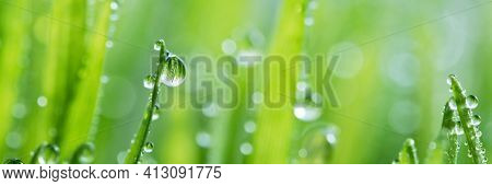 Macro Wet Spring Green Grass Backround With Dew. Natural Beautiful Water Drop On Leaf In Sunlight, I
