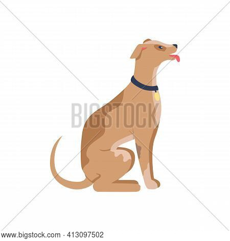 Obedient Dog In Collar Flat Color Vector Detailed Character