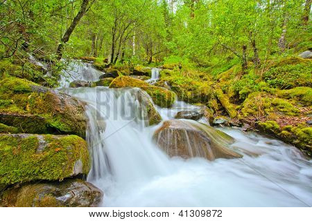 Wasserfall In einem Wald-Fluss