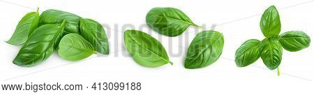 Fresh Basil Leaf Isolated On White Background With Clipping Path And Full Depth Of Field. Top View.