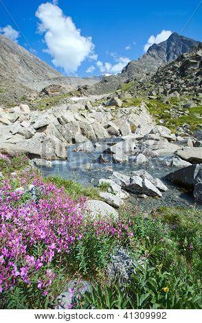 Blumen am Ufer des ein Gebirgsbach