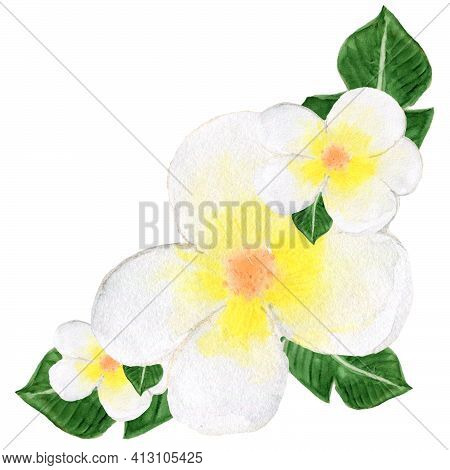 Watercolor Bouquet With White Plumeria. Tropical Composition. A Bouquet Of Flower And Leaves. Hawaii