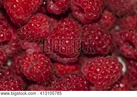 Red Raspberries. Raspberry Background. Fresh Big Bright Appetizing Raspberry. View From Above. Macro