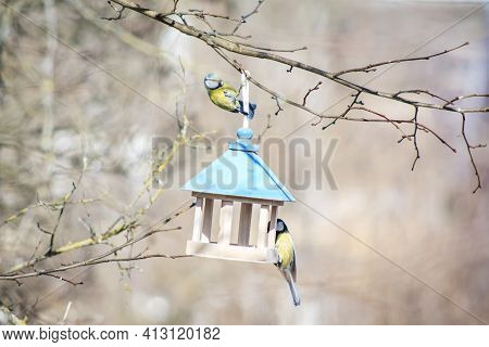 Great Tit And Blue Tits Eat From Wooden Bird Feeder. Feeding Birds In Winter Concept