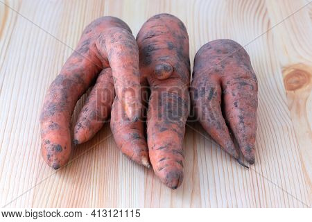 Trendy Ugly Organic Carrots From Home Garden On A Wooden Barn Table. Selective Focus.