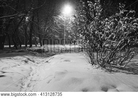 Winter Night In The Snowy Old Park.  Snow Covered Ground Among Snowy Trees. Winter Cityscape. Black