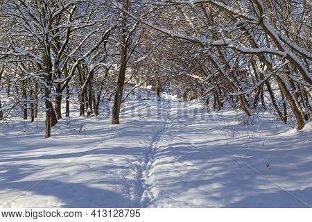 Landscape With Snow-covered City Park On A Bright Sunny Winter Day. Footprints In The Snow Among The