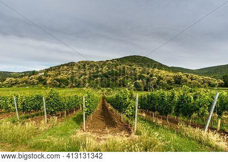 Vineyards Near Neustadt An Der Weinstrasse, German Wine Route, Rhineland-palatinate, Germany