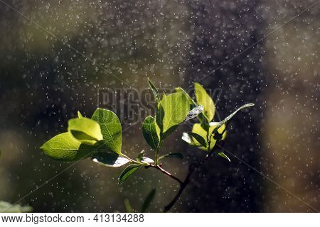 Twig With Blossoming Leaves And Water Droplets In The Air