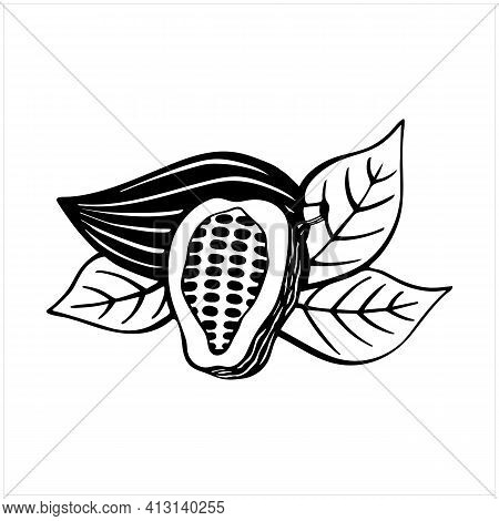 Cacao Fruits With Leaves, Raw Cacao Beans, Cocoa Pods, Isolated Hand Drawn Vector Illustration In Bl