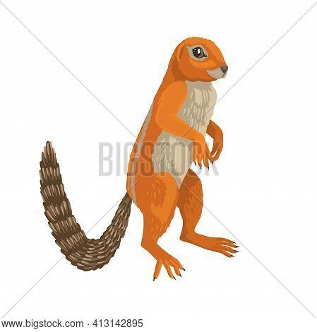 Xerus Inauris, Ground Squirrel, African Animal. Cute Childrens Illustration, Ginger Animal. Vector C