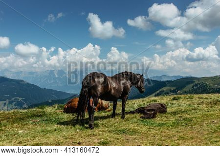 Horse On A Pasture With A Great View Of The Mountains. Brown Stallion Roaming Free In Summer Alpine
