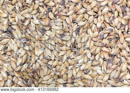 Close Up Photo Malt Grains, Top View