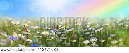 Abstract Spring Background With Daisy Flower Butterfly And Bokeh Lights