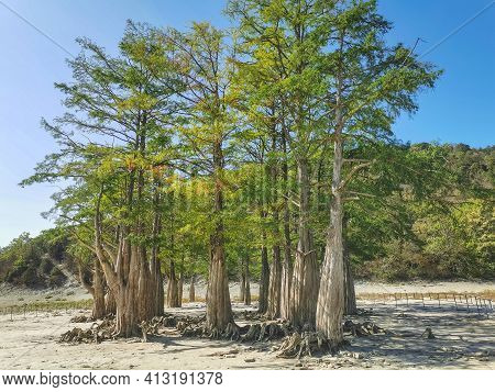 Lake Cypress In Sukko. Attractions Of Anapa. Green Lake. The Nature Of Russia. A Dry Lake. Cypresses