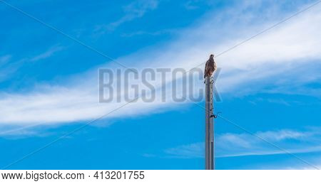 Carcará Falcon (caracara Plancus) Perched On A Concrete Pole And In The Background The Blue Sky