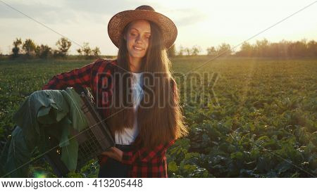 Agriculture. Farmer Girl In A Walk On A Green Field With Box At Sunset. Business Natural Food Agricu