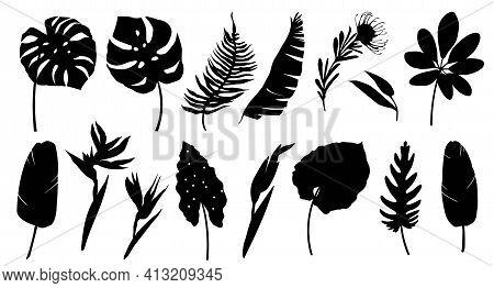 Set Of Black Silhouettes Of Tropical Leaves, Palms, Plants, Flowers, Banana Plants, Monstera. Botani