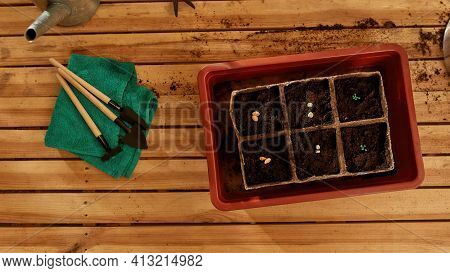 Grains Lying In The Ground With Tools For Cultivating The Ground. Land On A Wooden Table With Land C
