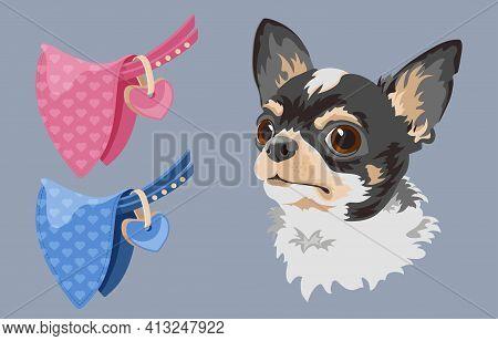 Dog Breed Chihuahua. Pet Head, Dog Collar And Bandana Vector.