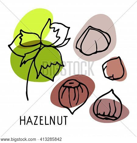 Hazelnut Set. Hand Drawn Vector Nuts, Nut Kernels And Hazelnut Text. Sketch With Colored Spots. Orga